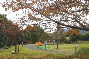 Đèn sân vườn năng lượng mặt trời TQS-2602-80cm